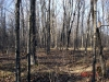 northwoods land for sale