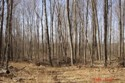 michigan hunting land